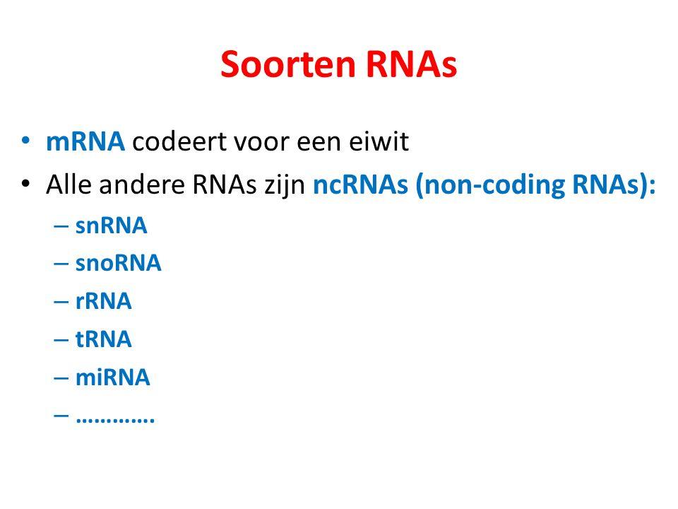 Soorten RNAs mRNA codeert voor een eiwit Alle andere RNAs zijn ncRNAs (non-coding RNAs): – snRNA – snoRNA – rRNA – tRNA – miRNA – ………….
