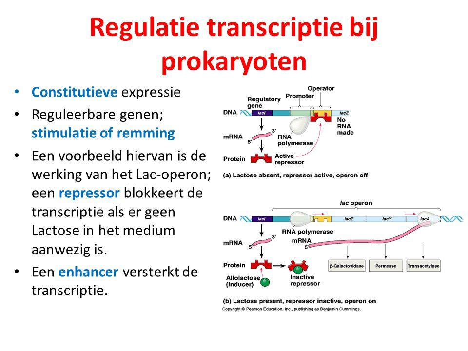 Regulatie transcriptie bij prokaryoten Constitutieve expressie Reguleerbare genen; stimulatie of remming Een voorbeeld hiervan is de werking van het L