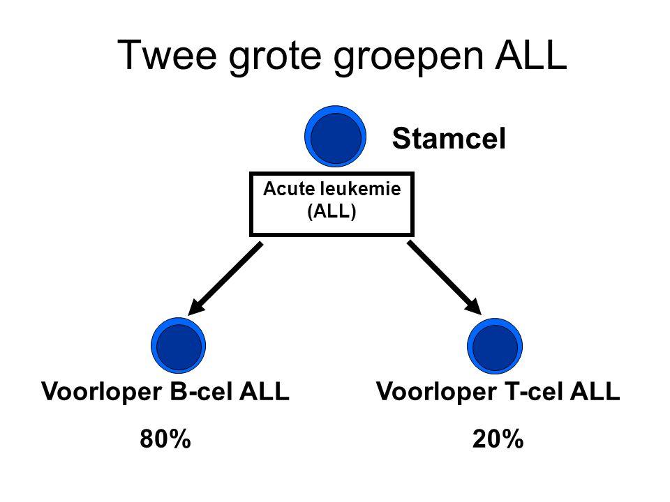 Twee grote groepen ALL Stamcel Voorloper B-cel ALL 80% Acute leukemie (ALL) Voorloper T-cel ALL 20%