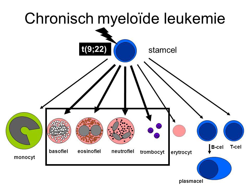 Chronisch myeloïde leukemie stamcel monocyt basofieleosinofielneutrofiel T-cel B-cel erytrocyt trombocyt plasmacel t(9;22)