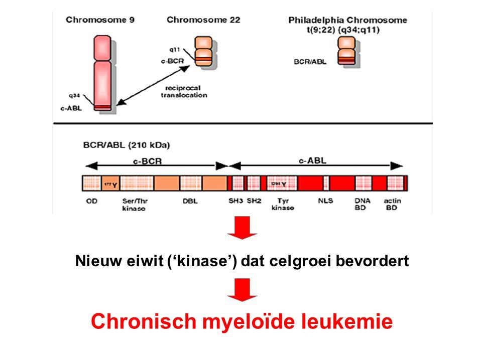 Nieuw eiwit ('kinase') dat celgroei bevordert Chronisch myeloïde leukemie