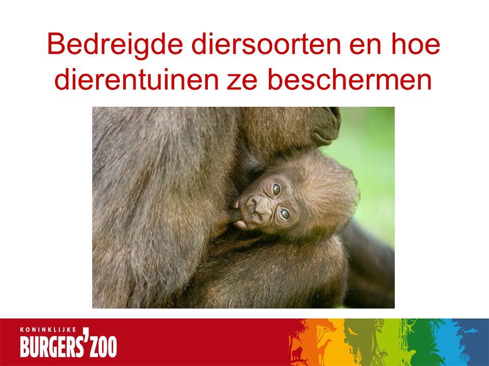 Bedreigde diersoorten en hoe dierentuinen ze beschermen