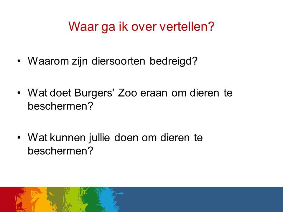 Waar ga ik over vertellen? Waarom zijn diersoorten bedreigd? Wat doet Burgers' Zoo eraan om dieren te beschermen? Wat kunnen jullie doen om dieren te