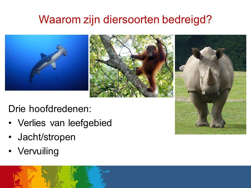 Waarom zijn diersoorten bedreigd? Drie hoofdredenen: Verlies van leefgebied Jacht/stropen Vervuiling