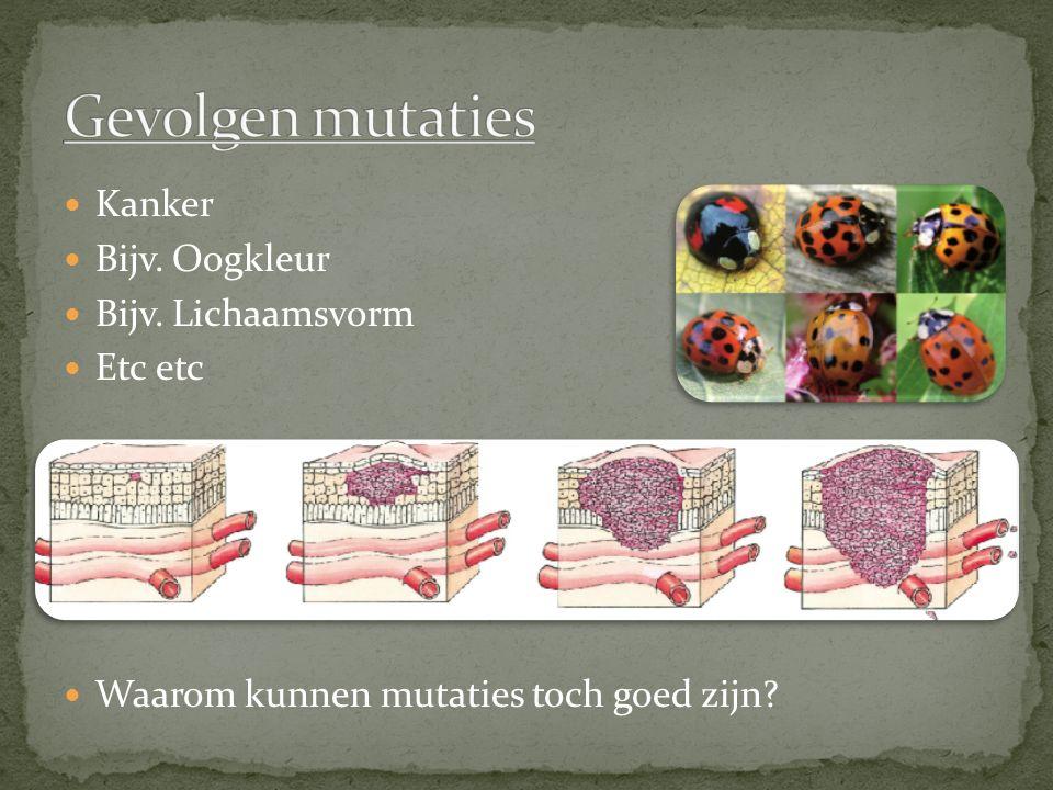 Kanker Bijv. Oogkleur Bijv. Lichaamsvorm Etc etc Waarom kunnen mutaties toch goed zijn?