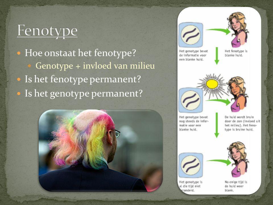 Hoe onstaat het fenotype? Genotype + invloed van milieu Is het fenotype permanent? Is het genotype permanent?