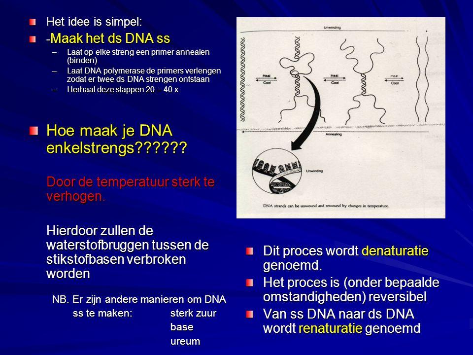 Het idee is simpel: - Maak het ds DNA ss –Laat op elke streng een primer annealen (binden) –Laat DNA polymerase de primers verlengen zodat er twee ds