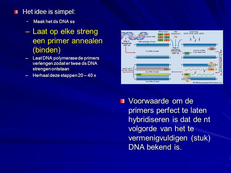 Het idee is simpel: - Maak het ds DNA ss - Maak het ds DNA ss –Laat op elke streng een primer annealen (binden) –Laat DNA polymerase de primers verlen