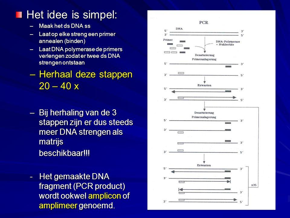 Het idee is simpel: –Maak het ds DNA ss –Laat op elke streng een primer annealen (binden) –Laat DNA polymerase de primers verlengen zodat er twee ds D