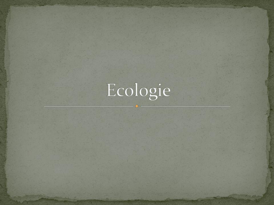 Oceaan/zee Verdamping Condensatie Neerslag Grondwater Filmpje