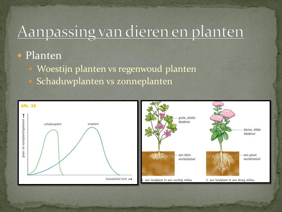 Planten Woestijn planten vs regenwoud planten Schaduwplanten vs zonneplanten