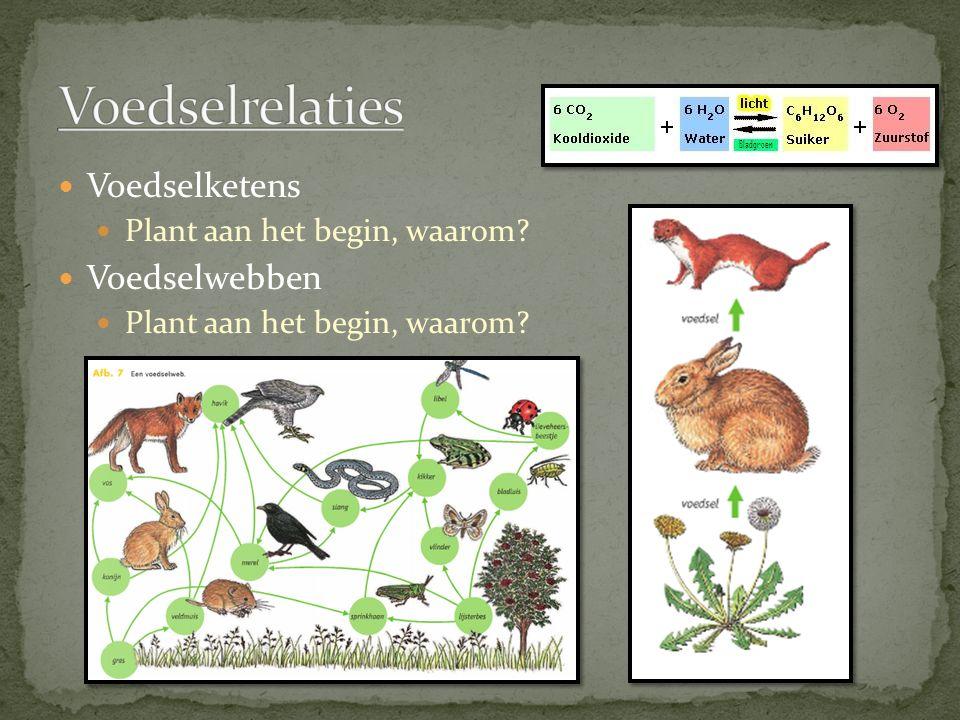 Voedselketens Plant aan het begin, waarom? Voedselwebben Plant aan het begin, waarom?