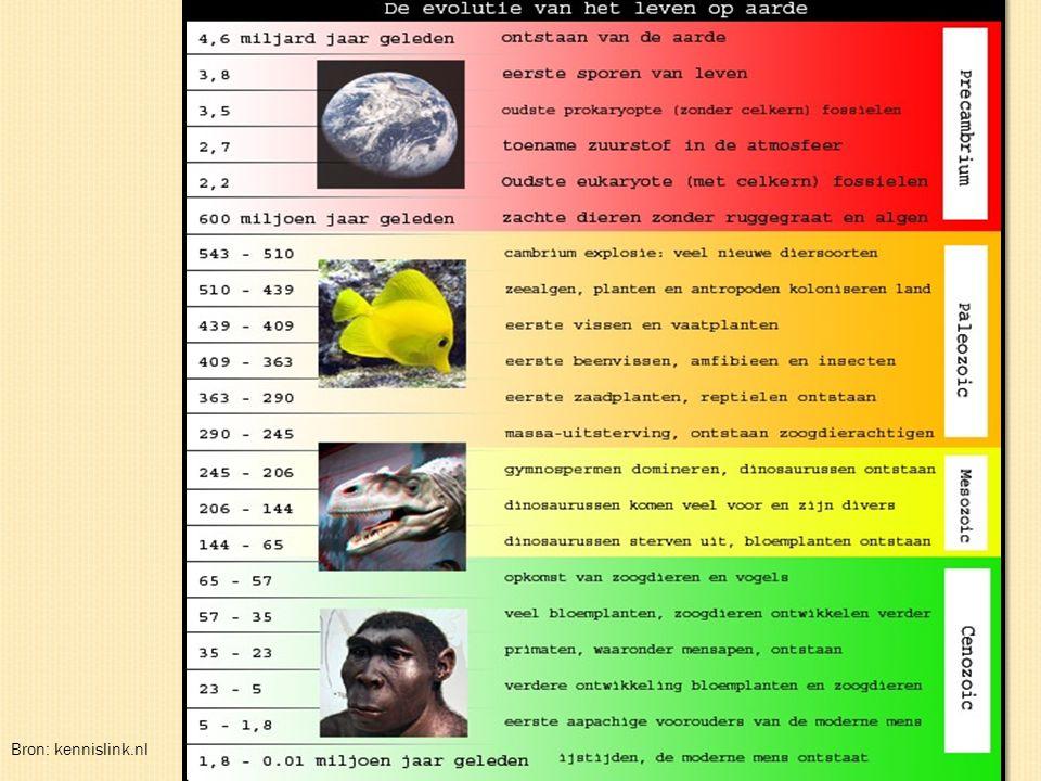 Bron: http://www.jvisbeek.dds.nl/artikelen/heelal_evolutie1.jpg