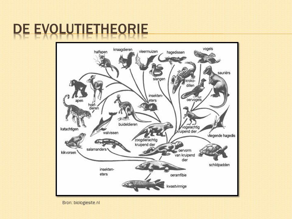 Bron: http://www.biologiesite.nl/evolutieolifant.jpg De evolutie van de olifant