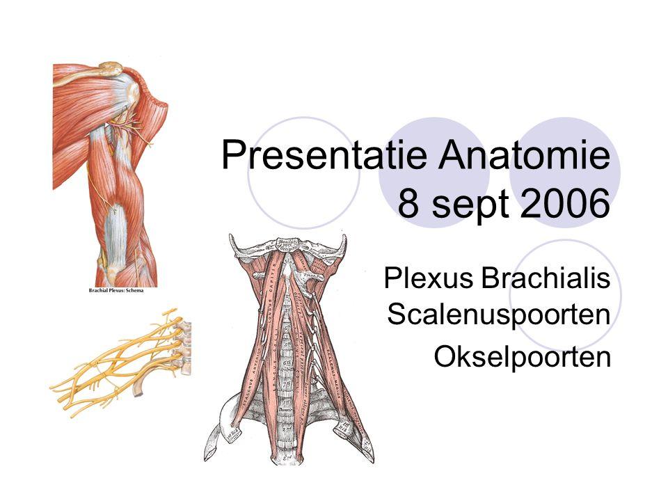 Presentatie Anatomie 8 sept 2006 Plexus Brachialis Scalenuspoorten Okselpoorten