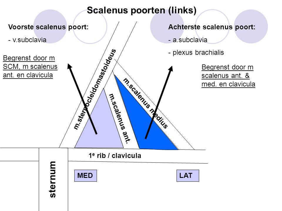 Voorste scalenus poort: - v.subclavia Achterste scalenus poort: - a.subclavia - plexus brachialis m.sternocleidomastoideus m.scalenus ant.