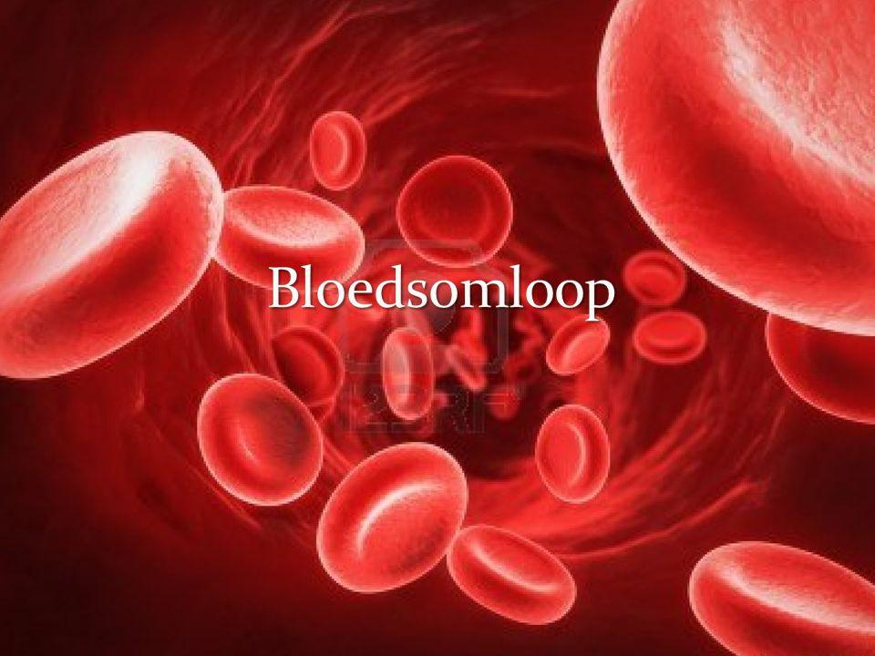 Bloedplasma Bloedcellen Rode bloedcellen Witte bloedcellen Bloedplaatjes Functie algemeen Vervoeren van stoffen Zuurstof (Rode bloedcellen) Voedingsstoffen (bloedplasma)