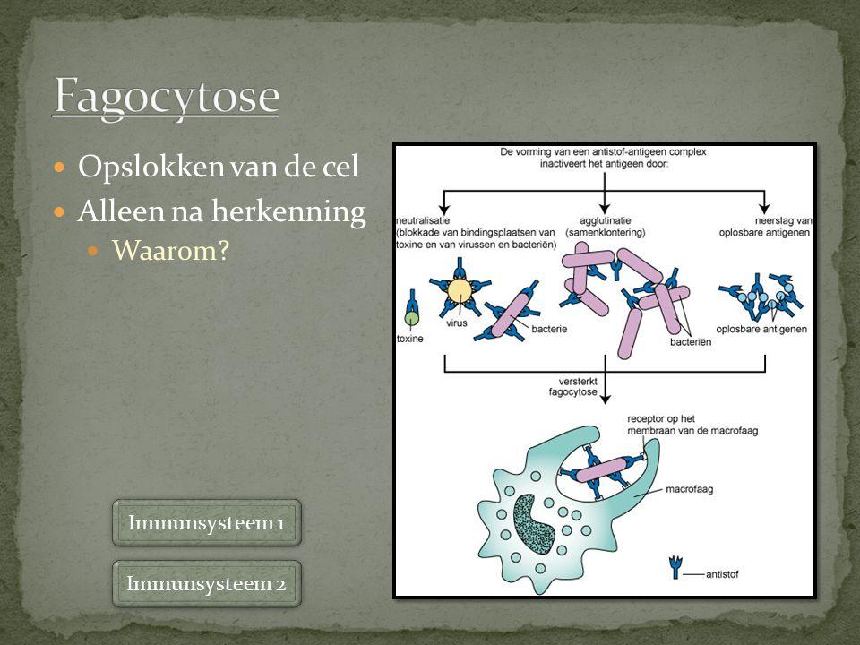 Opslokken van de cel Alleen na herkenning Waarom? Immunsysteem 1 Immunsysteem 2