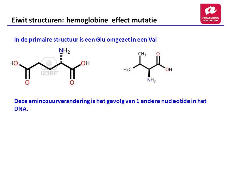 Eiwit structuren: hemoglobine effect mutatie In de primaire structuur is een Glu omgezet in een Val Deze aminozuurverandering is het gevolg van 1 ande