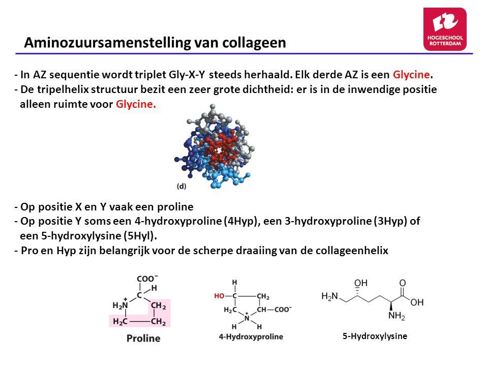 Aminozuursamenstelling van collageen - In AZ sequentie wordt triplet Gly-X-Y steeds herhaald. Elk derde AZ is een Glycine. - De tripelhelix structuur