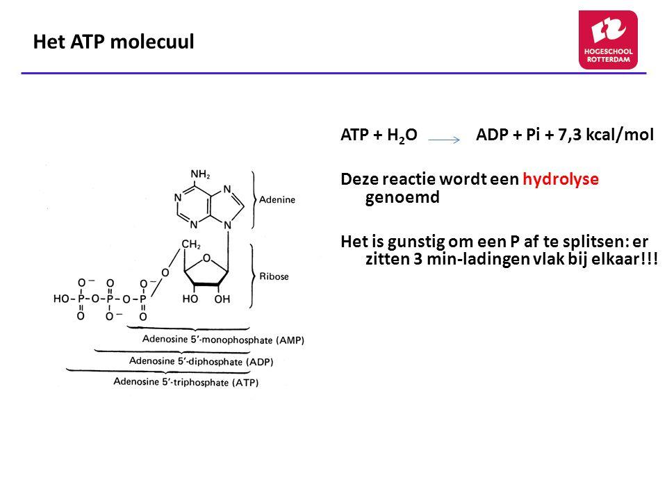 Het ATP molecuul ATP + H 2 O ADP + Pi + 7,3 kcal/mol Deze reactie wordt een hydrolyse genoemd Het is gunstig om een P af te splitsen: er zitten 3 min-