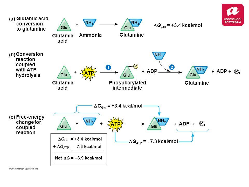 Glutamic acid Ammonia Glutamine (b) Conversion reaction coupled with ATP hydrolysis Glutamic acid conversion to glutamine (a) (c) Free-energy change f