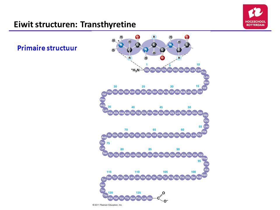 Eiwit structuren: Transthyretine Secundaire structuren Tertiaire structuur Quaternaire structuur