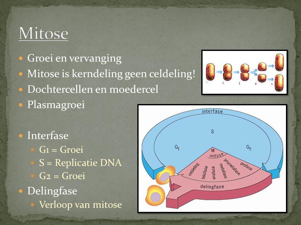 Groei en vervanging Mitose is kerndeling geen celdeling.