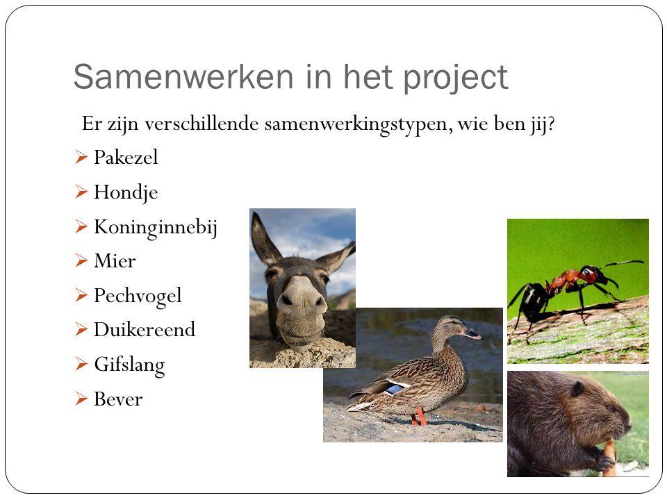 Samenwerken in het project Er zijn verschillende samenwerkingstypen, wie ben jij?  Pakezel  Hondje  Koninginnebij  Mier  Pechvogel  Duikereend 