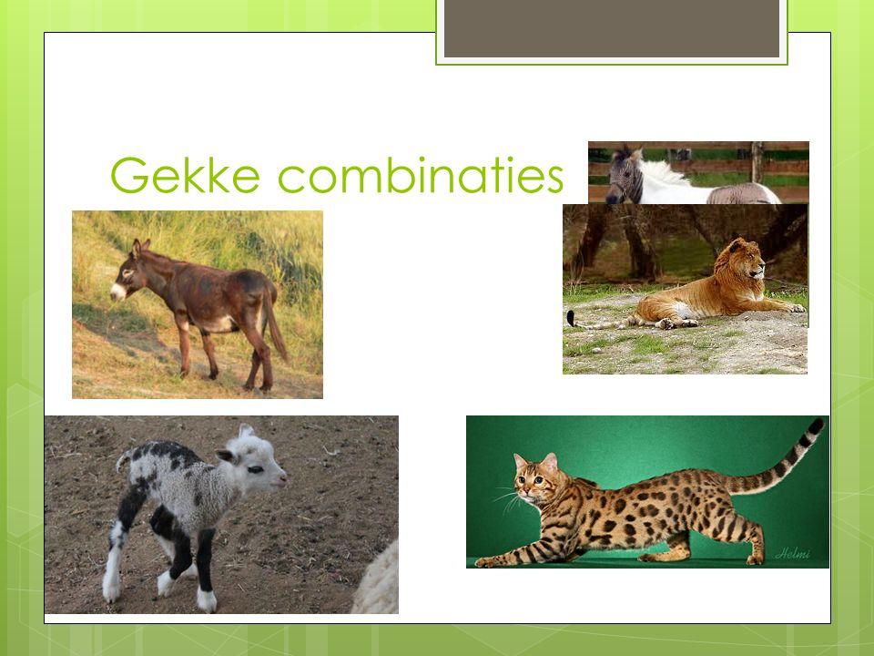 Domesticatie  Wilde dieren fokken tot huisdieren  https://www.youtube.com/watch?v=0jFG NQScRNY https://www.youtube.com/watch?v=0jFG NQScRNY