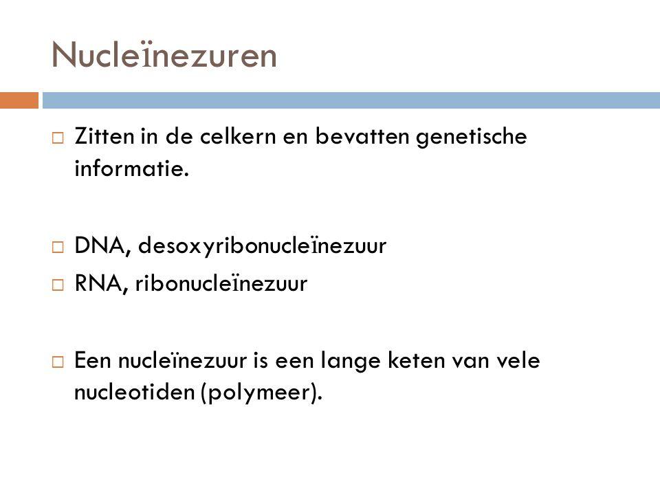 Nucle ï nezuren  Zitten in de celkern en bevatten genetische informatie.  DNA, desoxyribonucle ï nezuur  RNA, ribonucle ï nezuur  Een nucleïnezuur