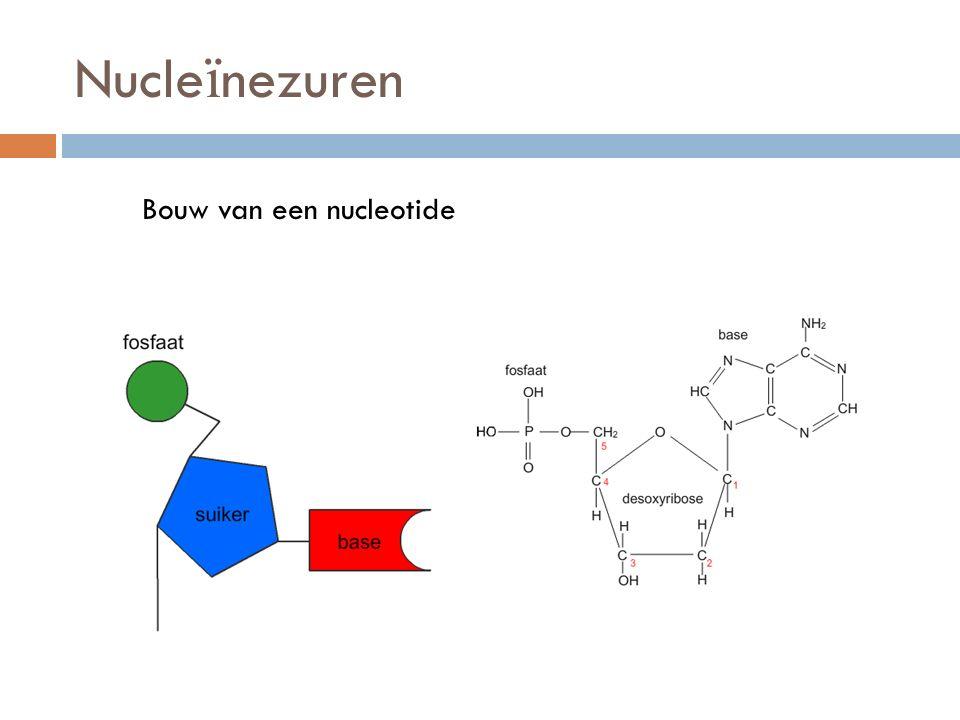 Nucle ï nezuren Bouw van een nucleotide
