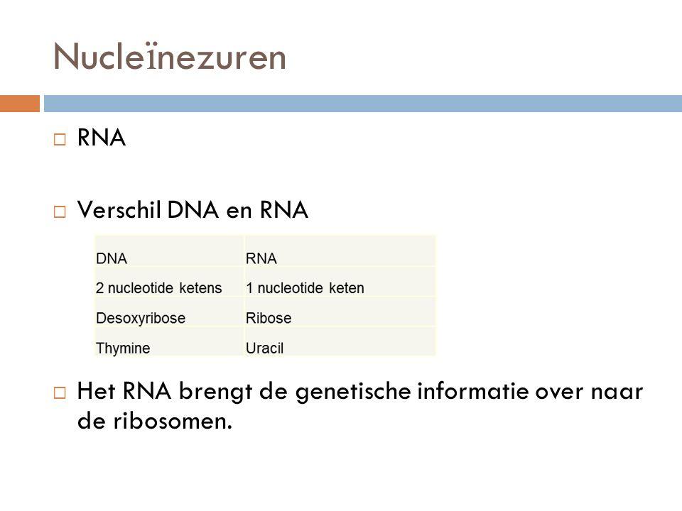  RNA  Verschil DNA en RNA  Het RNA brengt de genetische informatie over naar de ribosomen. Nucle ï nezuren