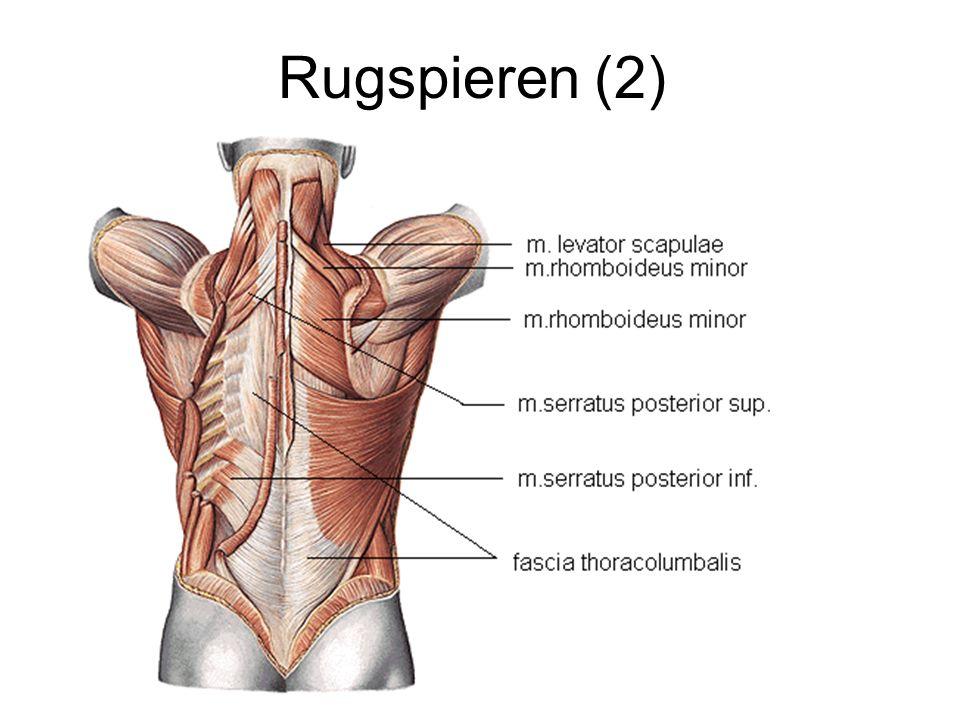 Rugspieren (2)