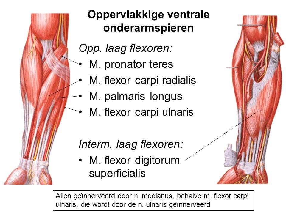 Opp. laag flexoren: M. pronator teres M. flexor carpi radialis M. palmaris longus M. flexor carpi ulnaris Interm. laag flexoren: M. flexor digitorum s