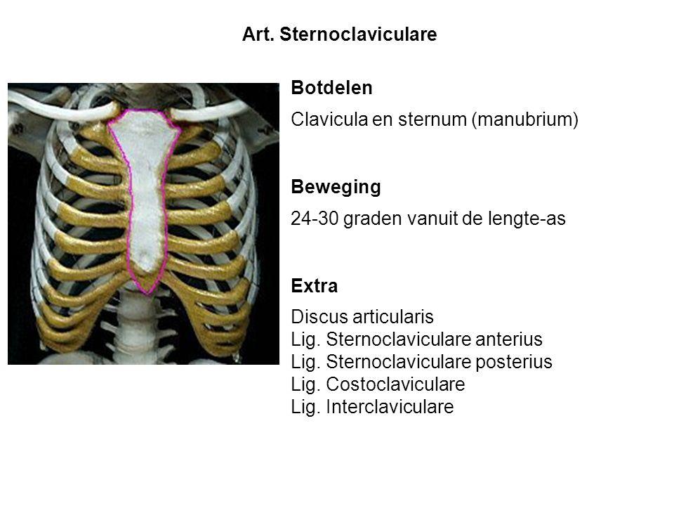 Botdelen Clavicula en sternum (manubrium) Beweging 24-30 graden vanuit de lengte-as Extra Discus articularis Lig. Sternoclaviculare anterius Lig. Ster