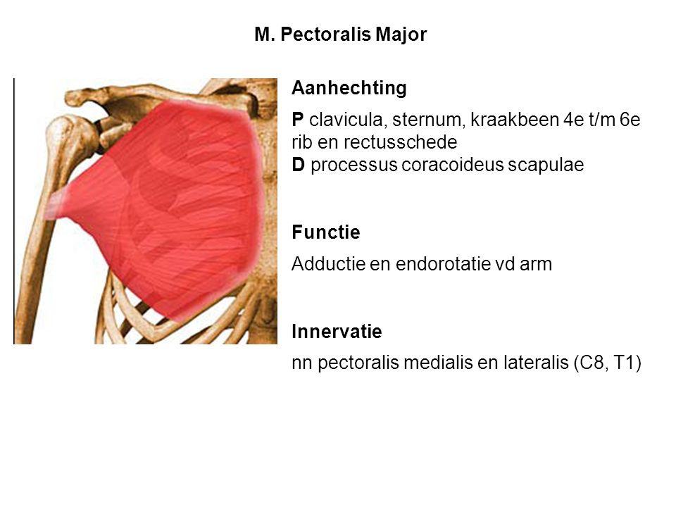 Aanhechting P clavicula, sternum, kraakbeen 4e t/m 6e rib en rectusschede D processus coracoideus scapulae Functie Adductie en endorotatie vd arm Inne