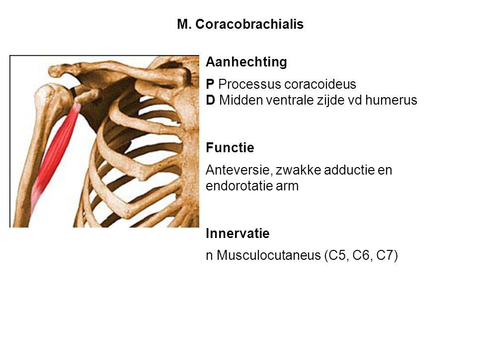 Aanhechting P Processus coracoideus D Midden ventrale zijde vd humerus Functie Anteversie, zwakke adductie en endorotatie arm Innervatie n Musculocuta