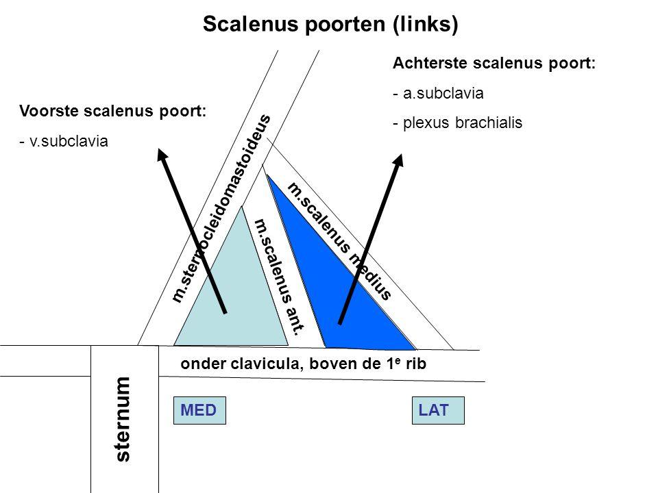 Voorste scalenus poort: - v.subclavia Achterste scalenus poort: - a.subclavia - plexus brachialis m.sternocleidomastoideus m.scalenus ant. m.scalenus