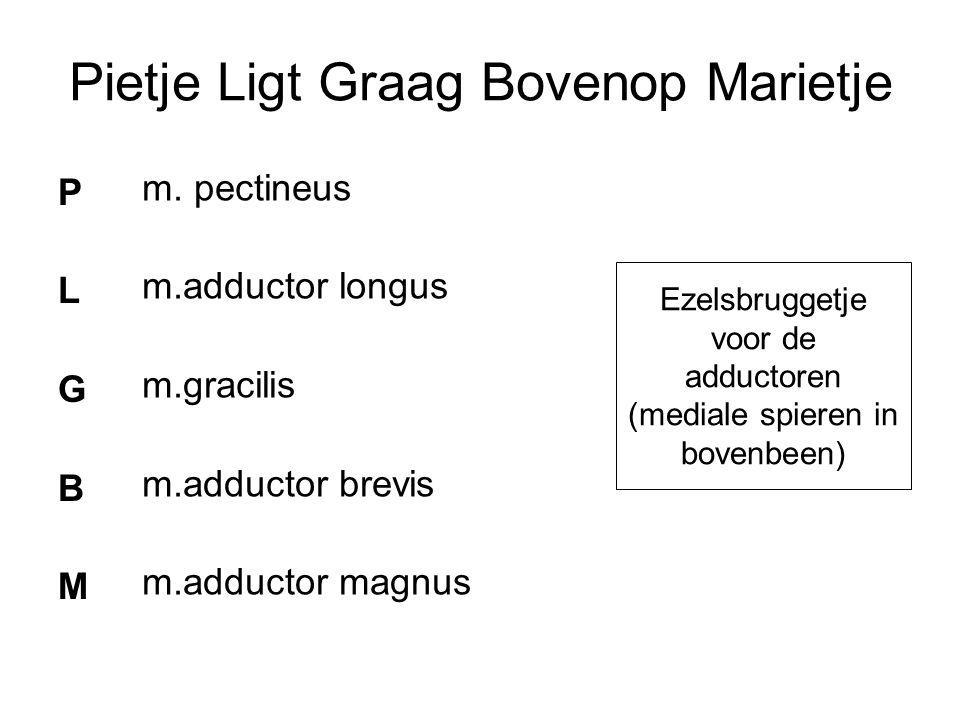 Ezelsbruggetje voor de adductoren (mediale spieren in bovenbeen) Pietje Ligt Graag Bovenop Marietje PLGBMPLGBM m. pectineus m.adductor longus m.gracil