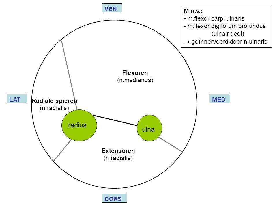 Radiale spieren (n.radialis) Flexoren (n.medianus) Extensoren (n.radialis) ulna radius LATMED VEN DORS M.u.v.: - m.flexor carpi ulnaris - m.flexor dig