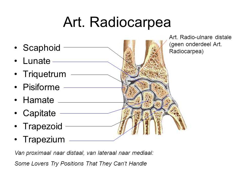 Art. Radiocarpea Scaphoid Lunate Triquetrum Pisiforme Hamate Capitate Trapezoid Trapezium Van proximaal naar distaal, van lateraal naar mediaal: Some