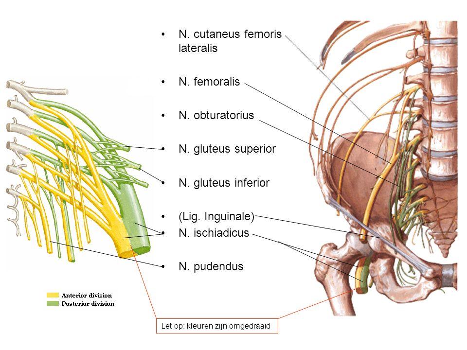N. cutaneus femoris lateralis N. femoralis N. obturatorius N. gluteus superior N. gluteus inferior (Lig. Inguinale) N. ischiadicus N. pudendus Let op: