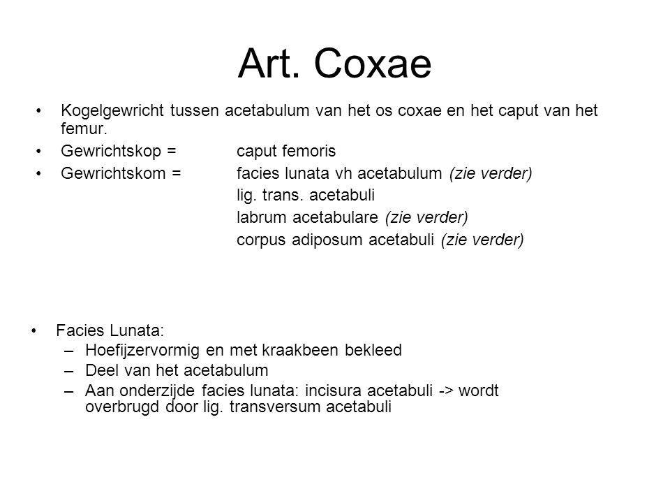 Art. Coxae Kogelgewricht tussen acetabulum van het os coxae en het caput van het femur. Gewrichtskop = caput femoris Gewrichtskom = facies lunata vh a