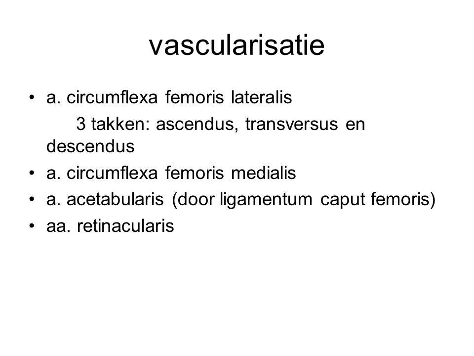 vascularisatie a. circumflexa femoris lateralis 3 takken: ascendus, transversus en descendus a. circumflexa femoris medialis a. acetabularis (door lig
