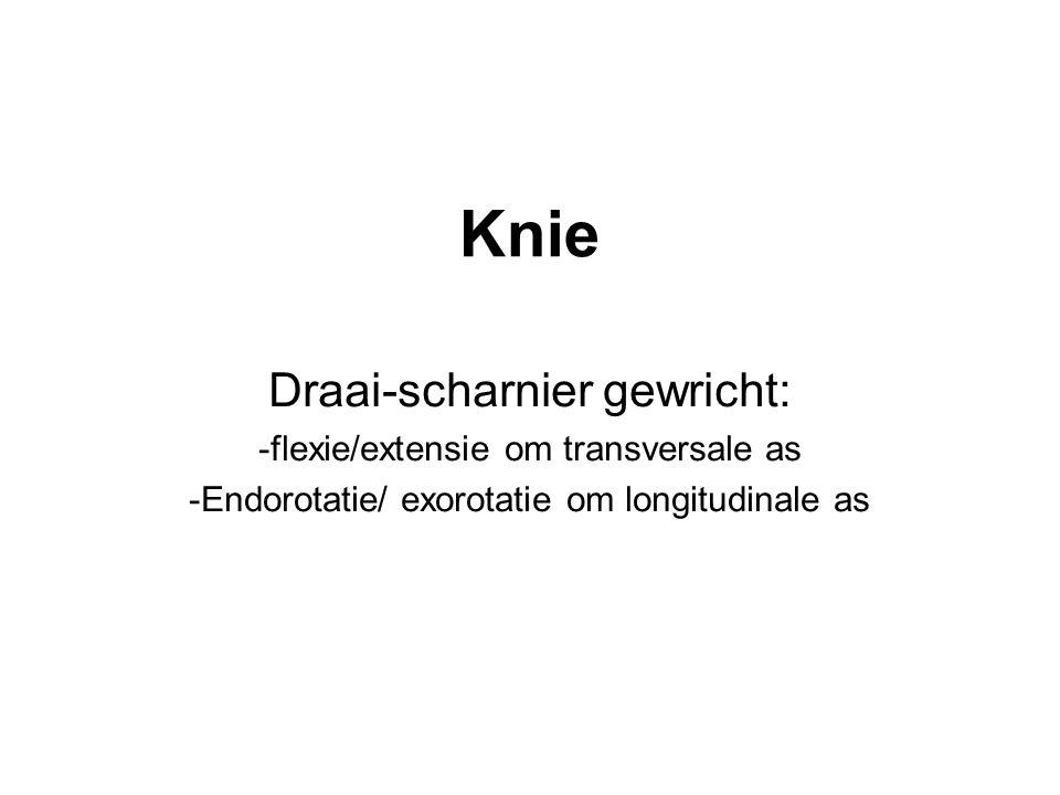 Knie Draai-scharnier gewricht: -flexie/extensie om transversale as -Endorotatie/ exorotatie om longitudinale as