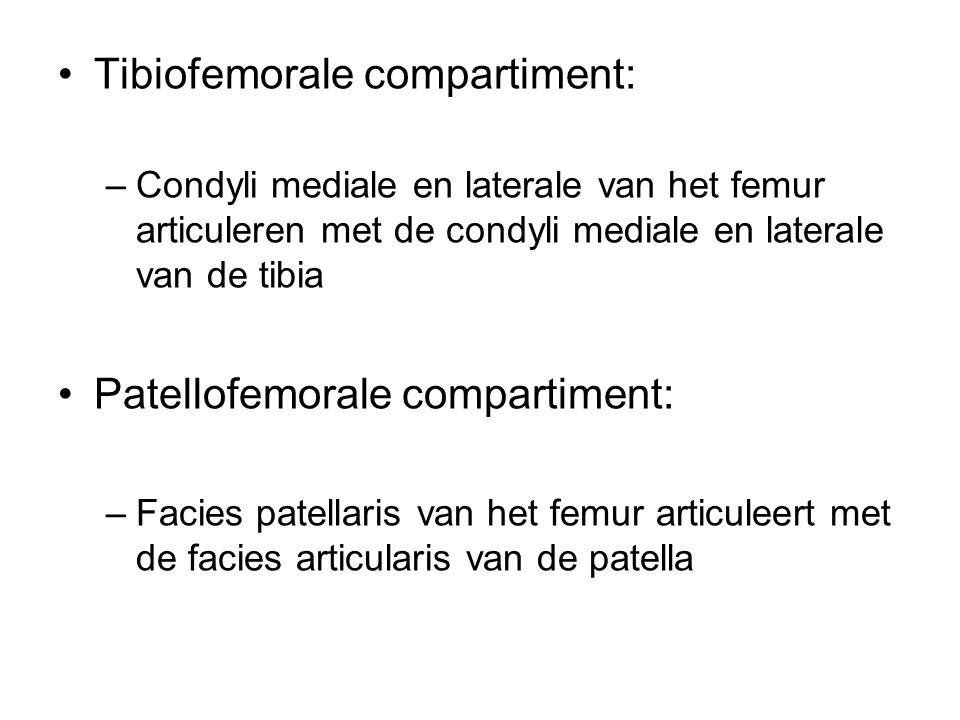 Tibiofemorale compartiment: –Condyli mediale en laterale van het femur articuleren met de condyli mediale en laterale van de tibia Patellofemorale com