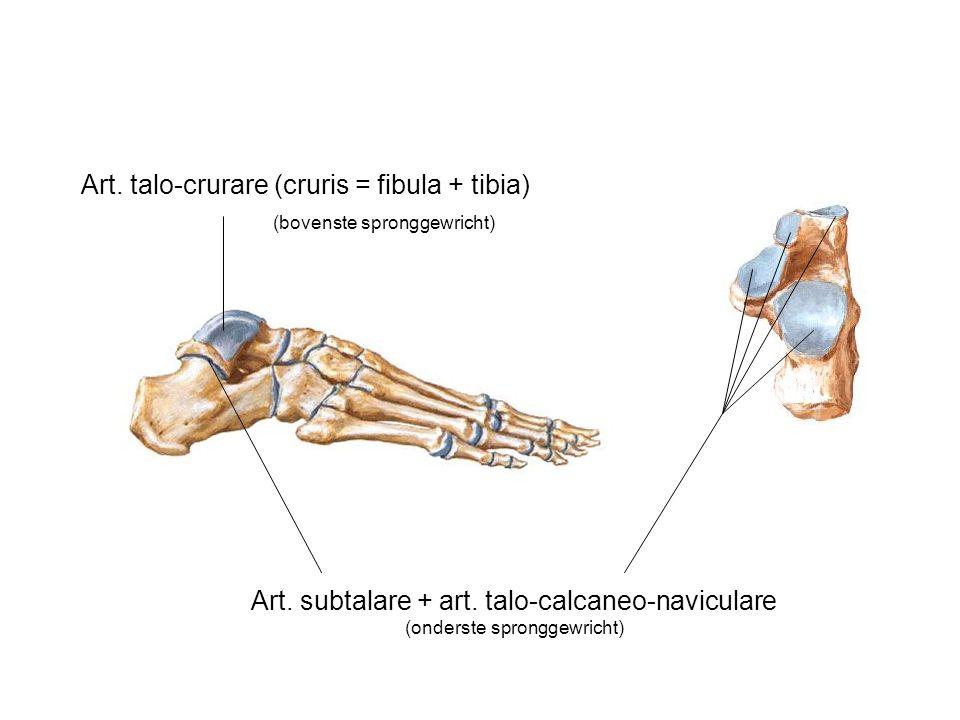 Art. subtalare + art. talo-calcaneo-naviculare (onderste spronggewricht) Art. talo-crurare (cruris = fibula + tibia) (bovenste spronggewricht)