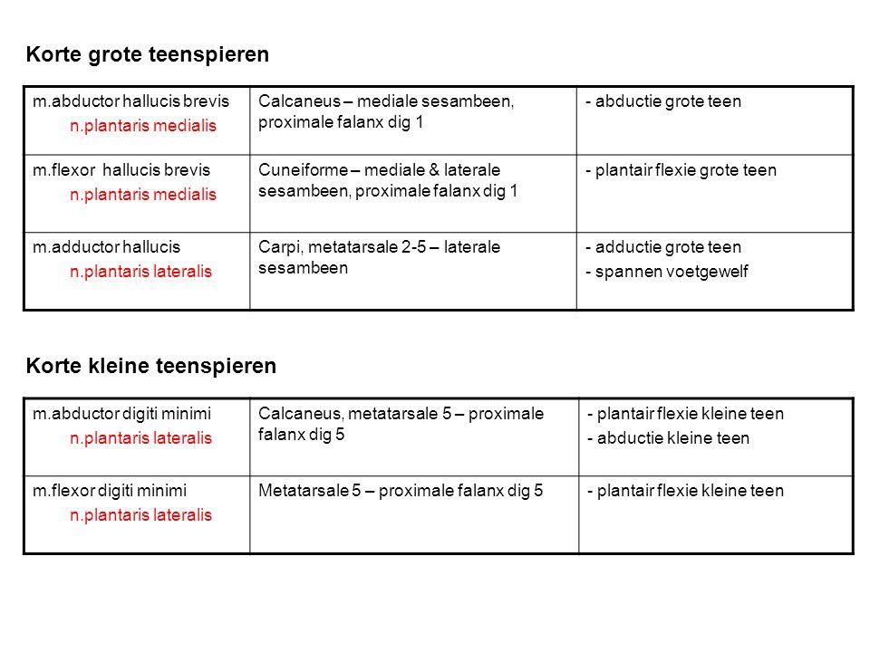Korte grote teenspieren Korte kleine teenspieren m.abductor hallucis brevis n.plantaris medialis Calcaneus – mediale sesambeen, proximale falanx dig 1