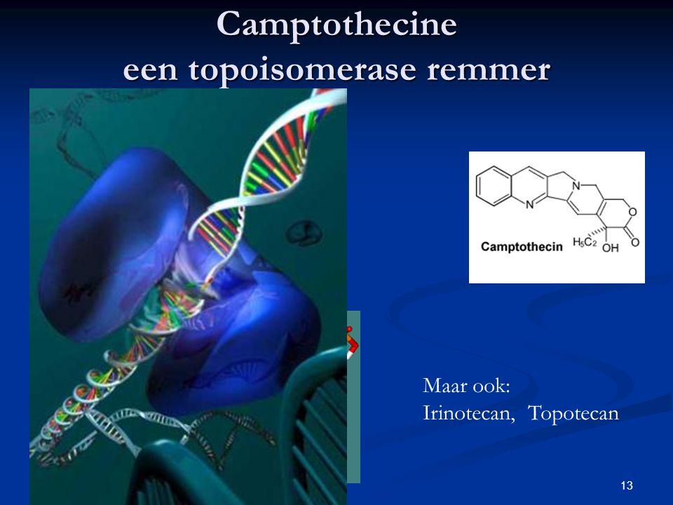 13 Camptothecine een topoisomerase remmer Maar ook: Irinotecan, Topotecan